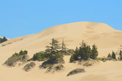 Oregon Dunes Royalty Free Stock Images