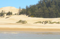 Oregon Dunes Royalty Free Stock Photo