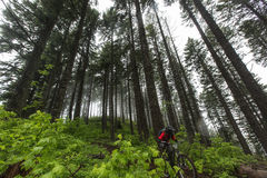 2013 Oregon Enduro. A racer rides through the fog and the forest during the 2013 Oregon Enduro in Hood River, Oregon stock photography