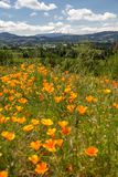 Oregon farmland sandwiched between blurred poppies and Mount Hood, Oregon. View of Oregon farmland and Mount Hood from Panorama Point off Hwy 35 near Hood River royalty free stock photo