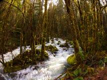Oregon flodlandskap royaltyfria foton