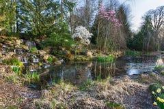Oregon garden in spring Royalty Free Stock Photo
