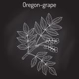 Oregon grape Mahonia aquifolium Stock Photo