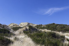 Oregon Grassy Beach Dune Blue Sky Royalty Free Stock Images