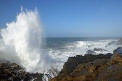 Oregon-Küste, Ufer-Morgen-Park Lizenzfreies Stockfoto