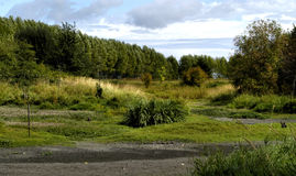 oregon krajobrazowi bagna Fotografia Royalty Free