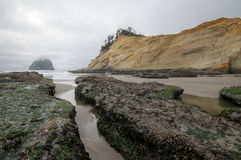 Oregon kustplats Royaltyfri Bild