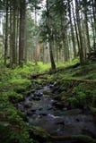 Oregon leśna scena Obrazy Royalty Free