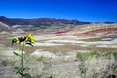 Oregon malowali wzgórza obraz royalty free
