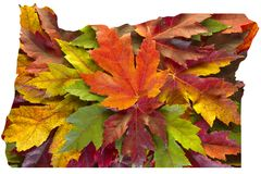 Oregon Maple Leaves Mixed Fall Colors Background USA Royalty Free Stock Image