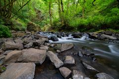 Oregon mountain river in the forest royalty free stock photos