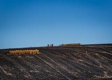 Oregon-Nebenstellen-Feuer - Inseln des Weizens auf schwarzem Boden lizenzfreies stockbild