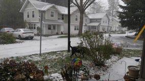 Oregon śnieg Zdjęcie Royalty Free