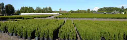 Oregon nurseries, panorama. Royalty Free Stock Image