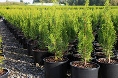 Oregon nurseries and seedling plants Stock Image