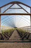 Oregon nurseries and seedling plants Royalty Free Stock Images