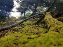 Oregon-Ozeanwald stockbild