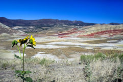 Oregon Painted Hills. John Day Fossil Beds National Monument Royalty Free Stock Image