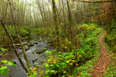 Oregon portait. Hiking trail along an Oregon Stream Stock Photography