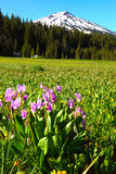 Oregon portrait. Blooming wildflowers in a meadow at the base of Mt. Bachelor located in the Oregon cascades Stock Photo