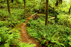 Oregon portrait. Forest path that leads to a wooden man made bridge Royalty Free Stock Photo
