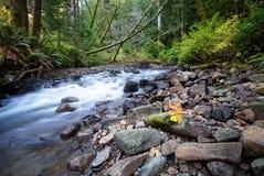Oregon rzeka Fotografia Royalty Free