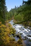 oregon rzeki łotrzyk sceniczny Zdjęcie Stock