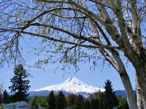 OREGON'S MOUNT HOOD. I took a day tour on the train in Oregon. This was one of our pretty stops along the way. I was lucky to find this great wispy tree to frame royalty free stock photography