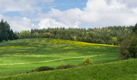 Oregon Spring. Panorama of rolling verdant sprng grass bPanorama of rolling hills covered with verdant spring grass under a line of trees and fluffy white royalty free stock image