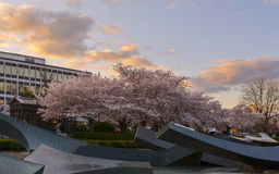 Oregon stanu Capitol park obrazy royalty free