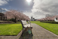 Oregon State Capitol Building with Cherry Blossom Trees Stock Photo