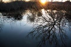 Oregon våtmarker på solnedgången royaltyfri fotografi