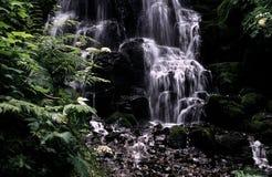 Oregon waterfall Stock Photography