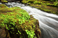 Oregon waterfall. Portrait of Bridge creek along highway 58 in Oregon Royalty Free Stock Image