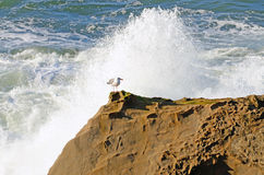 Oregon Waves Stock Photos