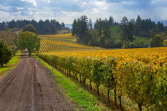 Oregon-Weinberg in Willamette-Tal Stockbild