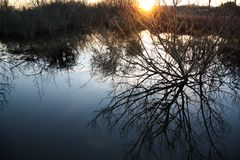 Oregon Wetlands at Sunset royalty free stock photography