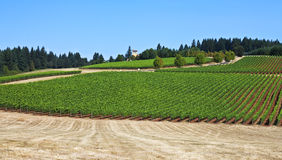 Oregon wine country. Spacious Willamette Valley vineyards near Dayton, Oregon Royalty Free Stock Image