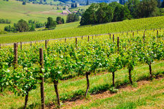 Oregon Winery and Vineyard Stock Images