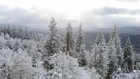 Oregon Winter Weather HD Video stock video