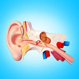 Oreille illustration libre de droits