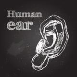 oreille Photos libres de droits