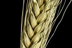 Oreille 2 de blé Images stock