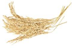 Oreille de rizière Photo stock