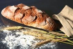 Oreilles croustillantes rustiques de pain et de blé sur une obscurité Image stock