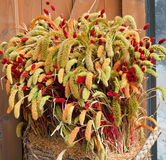 Oreilles décoratives de blé Images libres de droits