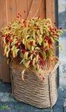 Oreilles décoratives de blé Photo libre de droits