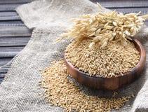 Oreilles d'avoine et de farine d'avoine dans la cuvette sur la table Gruau cru image stock