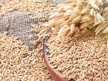 Oreilles d'avoine et de farine d'avoine dans la cuvette sur la table Gruau cru photo libre de droits