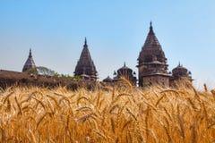 Oreilles d'or de blé à un champ indien avec de vieilles tours indiennes photographie stock